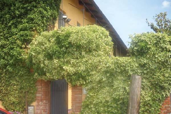 Foto 2 di Rustico / Casale via Vallongo, Villastellone